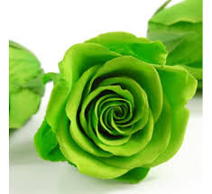 green roses buy green seeds pack of 5 seeds online at cheap price