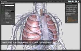 Human Anatomy And Physiology Pdf File Biodigital Human Chrome Web Store