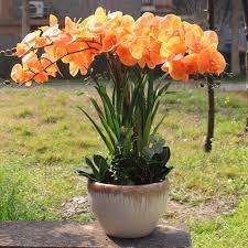 Orchid Flower Arrangements Aliexpress Com Buy Orange Orchid Sunset Color Real Touch Flower