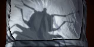 What Causes Bed Bugs To Come Out What Causes Bed Bugs And How To Get Rid Of Them Molekule Blog