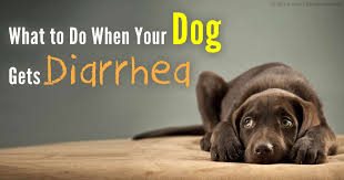 What Causes Dogs To Go Blind Pet Diarrhea Causes Symptoms And Treatment