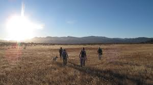 mojave desert native plants learn about mojave desert land trust mdlt