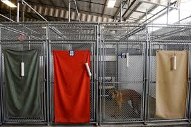 adams county aminal shelter to build new facility and dog park on