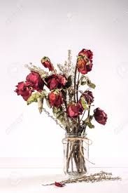 bouquet of red dried roses in glass vase on white background stock