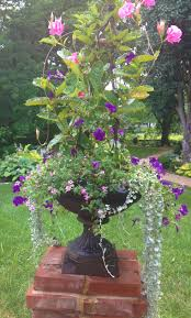 cascading wave petunias and lantana surround a mandevilla topiary