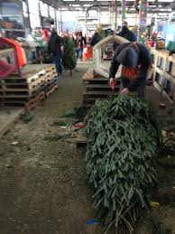 saturday street style buying the christmas tree u2013 lifestyle of a