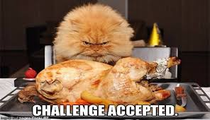 Funny Thanksgiving Meme - i can has cheezburger thanksgiving funny animals online