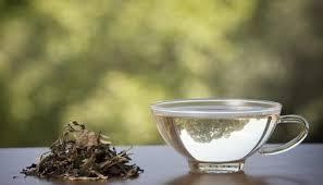 Teh Putih 10 manfaat teh putih untuk kesehatan efek singnya khasiat sehat