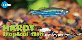 freshwater tropical fish species profile zebra danio hardy