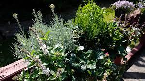 winterharte pflanzen balkon balkon und terrasse mit pflanzen gestalten ndr de ratgeber