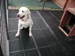 Best Flooring With Dogs Brilliant Kennel Tuff Within Kennel Flooring Primedfw