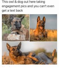 Dog Text Memes - i can t even get a text back memes