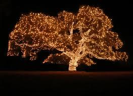 outdoor tree fairy lights sacharoff decoration