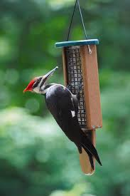 Backyard Wild Birds Here Are Tips For Taking Care Of Your Winter Backyard Birds From