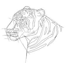tiger drawing free drawing lessons