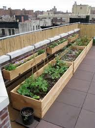 the 25 best roof garden plants ideas on pinterest rooftop