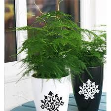 Best Plants For Bathrooms Plants For Bathrooms Johnstown Garden Centre Ireland
