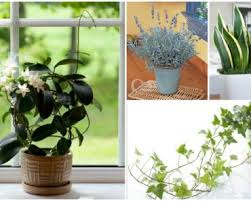 Plant For Bedroom Fab Art Diy Page 11 Of 255 Fab Ideas To Inspire Your Daily Life