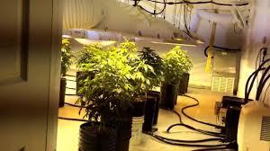 grow rooms trellis netting in veg youtube