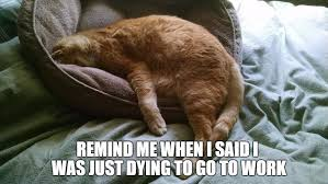 Sleepy Cat Meme - 31 funny good morning memes for each day of the month