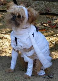 Small Dog Costumes Halloween 15 Halloween Dog Costumes Images Dog Halloween
