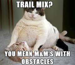 Mean Cat Memes - trail mix you mean cat meme cat planet cat planet