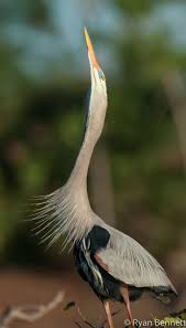 heron meaning 2194 best long legs birds images on pinterest nature beautiful
