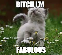 bitch i m fabulous fabulous kitten quickmeme