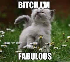 Bitch Im Fabulous Meme - bitch i m fabulous fabulous kitten quickmeme