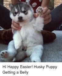Funny Husky Memes - 25 best memes about husky husky memes