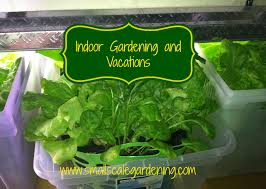 indoor gardening and vacations small scale gardening
