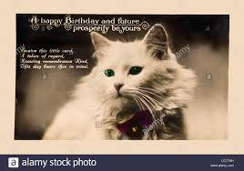 1920 u0027s birthday card in the form of a postcard white cat with