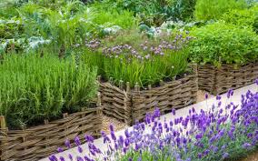How To Design A Flower Bed How To Design A Productive Garden The Telegraph