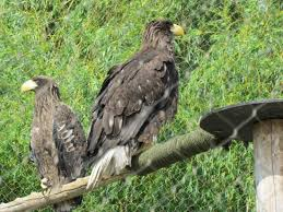 a pair of sea eagle picture of toronto zoo toronto tripadvisor