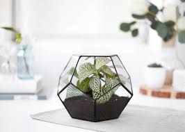 glass terrarium geometric container geometric planter indoor