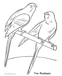parakeet coloring 019
