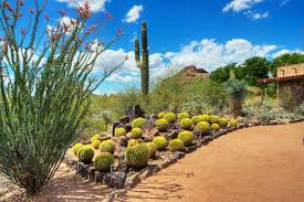 Phx Botanical Garden Gardens Parks Zoos Things To Do In
