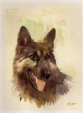 belgian sheepdog calendar s l225 jpg