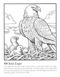 bald eagle coloring page science facts about animals color sheets