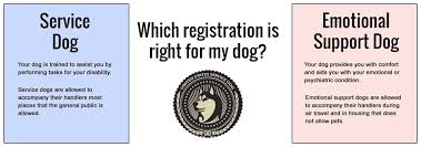 Comfort Dogs Certification Us Service Dogs Service Dog Registration And Products Get Your