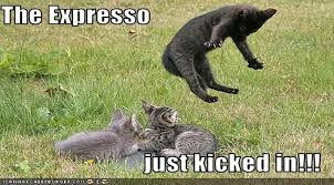 Funny Coffee Memes - i can has cheezburger coffee funny animals online cheezburger