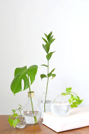 home decoration with plants 4 ideas for decorating with plants burkatron