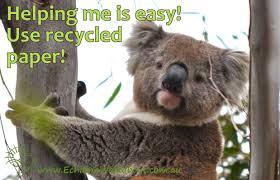 koala conservation koala clancy