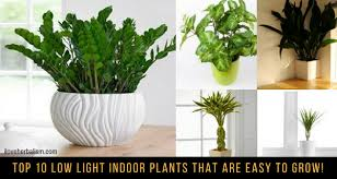 best light for plants top 10 low light indoor plants that are easy to grow i love within