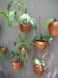 Hanging Plants For Patio 80 Best Garden On A Wall Living Walls Images On Pinterest Clay