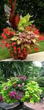 Potted Plant Ideas For Patio by Best 25 Container Flowers Ideas On Pinterest Container Plants