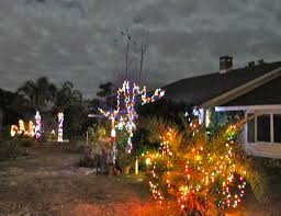 christmas lights in palm trees phillip u0027s natural world