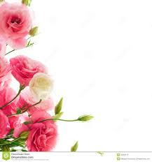 free background flowers free free background flowers