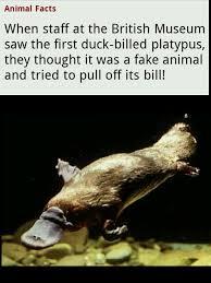 Platypus Meme - platypus meme by yodog108 memedroid