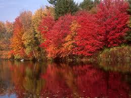 5 england fall foliage tour white mountain route boston